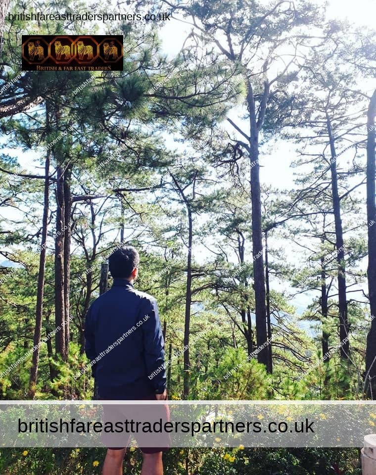 AWAKEN YOUR INNER ZEN IN FOREST LODGE, CAMP JOHN HAY, BAGUIO CITY, PHILIPPINES