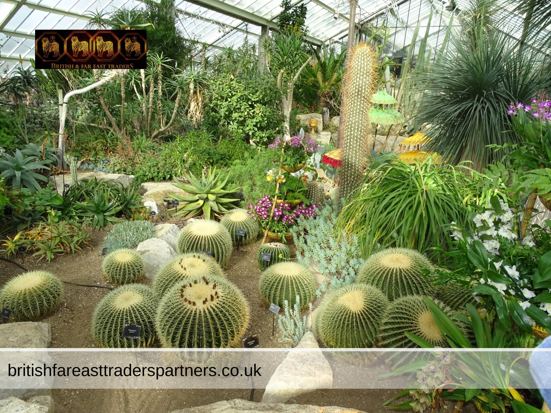 DESERT ZONE: FESTIVAL OF THE VIBRANT ORCHIDS OF INDONESIA AT KEW GARDENS LONDON UNITED KINGDOM