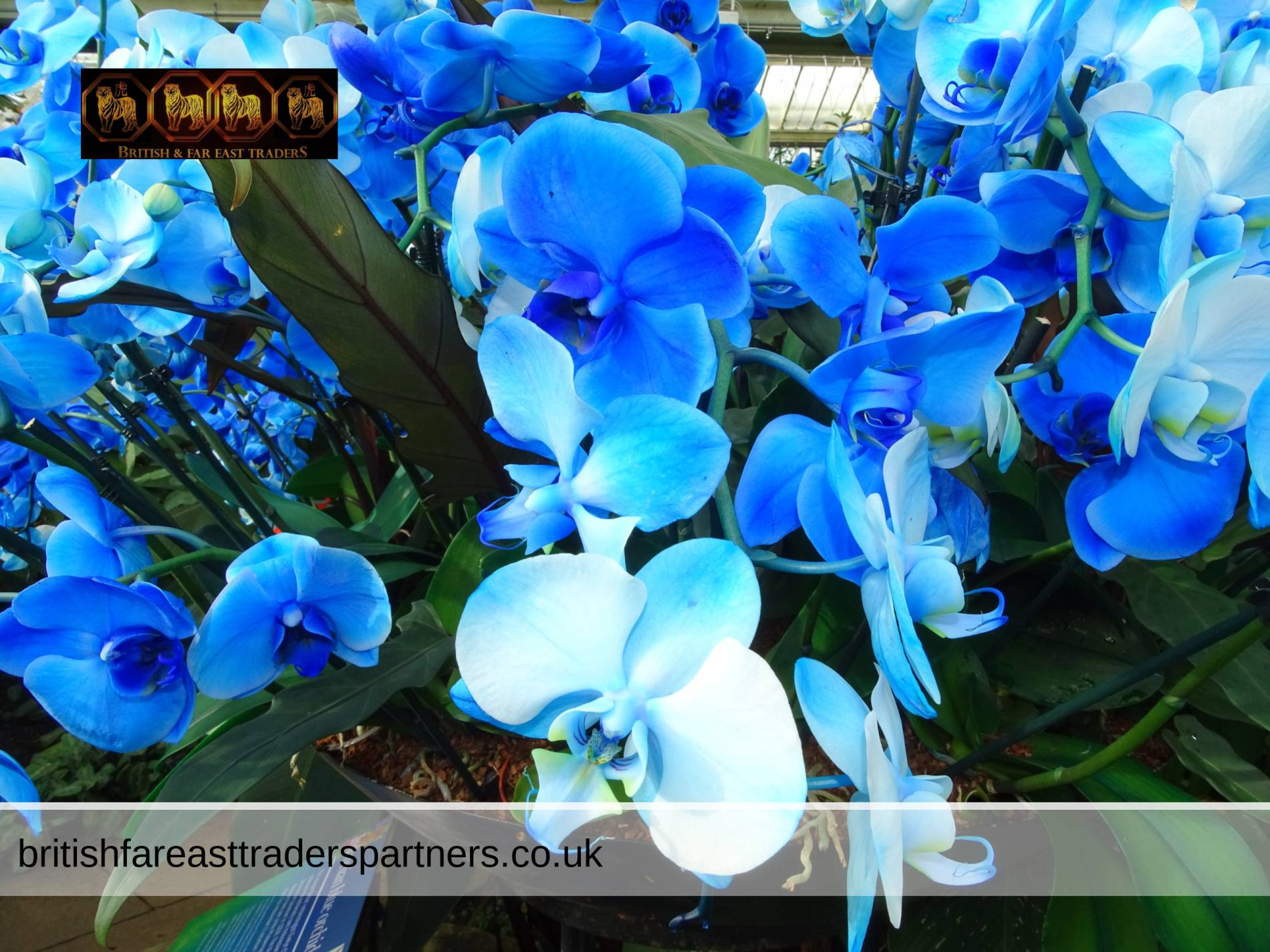 TROPICAL ZONE: FESTIVAL OF THE VIBRANT ORCHIDS OF INDONESIA AT KEW GARDENS LONDON UNITED KINGDOM