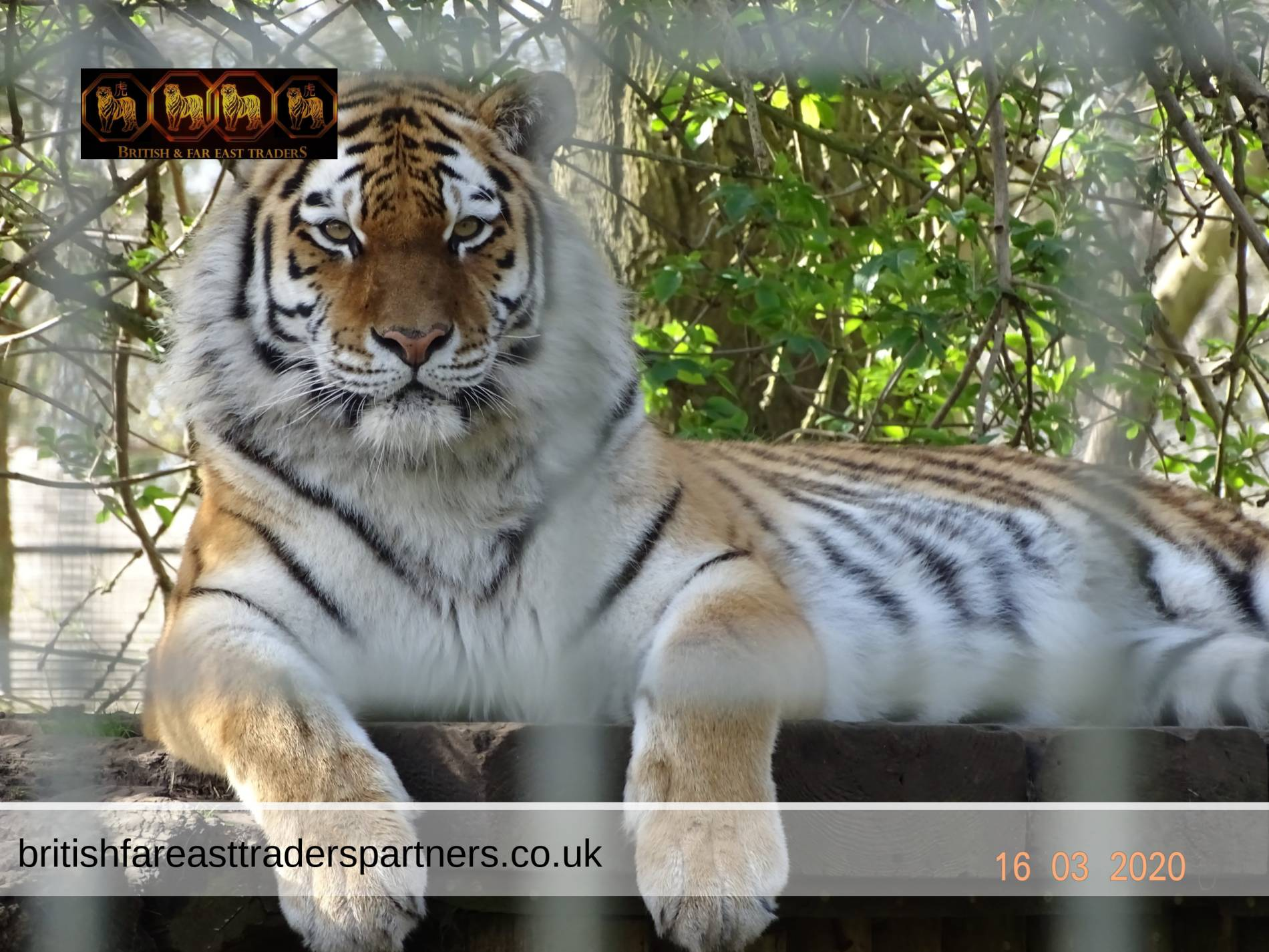 WANDERING AROUND THE BEAUTIFUL PORT LYMPNE HOTEL & RESERVE IN KENT, ENGLAND