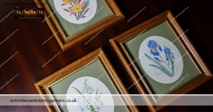 VINTAGE Lot of 3 Signed Elizabeth SHEPPARD Florals / Flowers Art Prints in WOODEN FRAME PICTURE