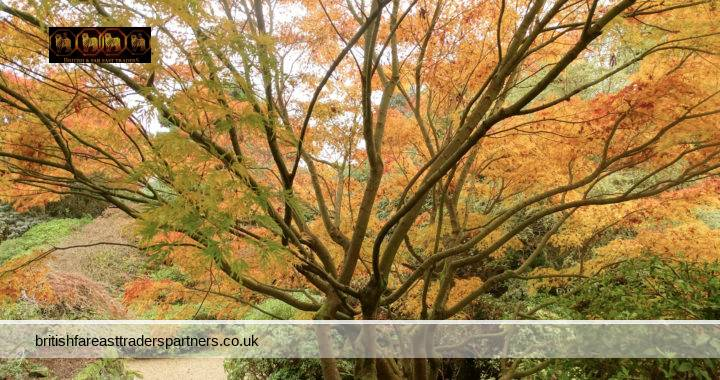 EXPERIENCE LEONARDSLEE LAKES & GARDENS IN A SPLENDID SHOW OF AUTUMN COLOURS: VISIT THE FINEST WOODLAND GARDENS IN ENGLAND