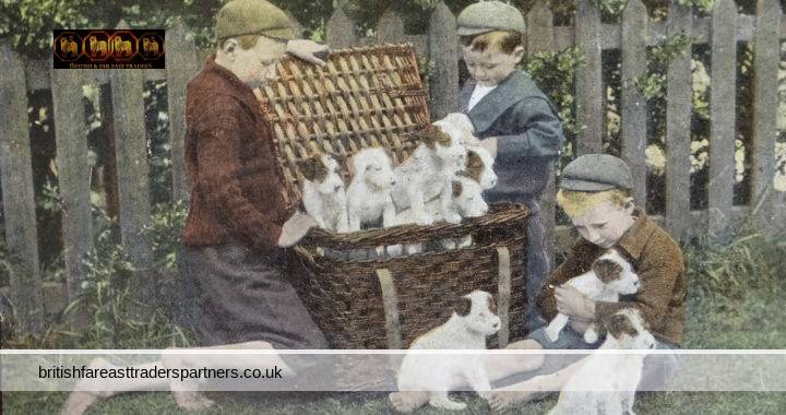 ANTIQUE February 1903 Young Boys & CUTE Puppies SUMMERTIME An Unexpected Present COLLECTABLE SOCIAL HISTORY YOUNG PEOPLE PETS & ANIMALS Post Card