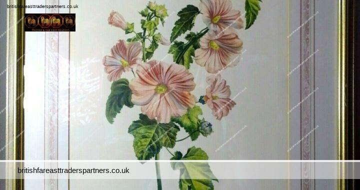VINTAGE LAVATERE A GRANDES FLEURS LAVATERE TRIMESTRIS L. Signed: G. Van Spaendonck del. L.C. Ruotte sculp. Florals / Flowers MATTED Art Print WOODEN FRAME PICTURE / WALL ART / HOME DECOR