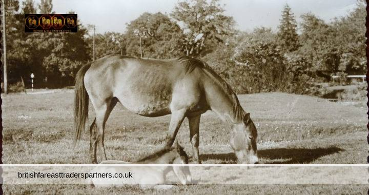 VINTAGE 30 SEPTEMBER 1958 THE PONIES IN THE NEW FOREST ENGLAND THUNDER & CLAYDEN SUN RAY SERIES RPPC Postcard COLLECTABLE SOUVENIR TRAVEL / HOLIDAY ANIMALS TOPOGRAPHICAL