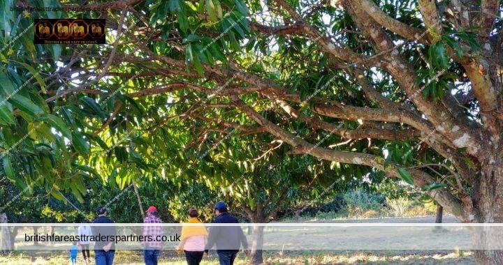 ESCAPE TO THE MANGO FARM: NUEVA ECIJA, PHILIPPINES